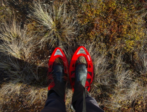 Bog shoe hike in your chosen destination